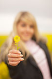 Girl stretches yellow flower Stock Images