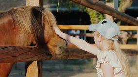 Girl strokes a cute pony that looks out from behind the fence.  stock footage