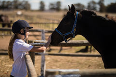 Girl stroking a brown horse in the ranch Royalty Free Stock Photo