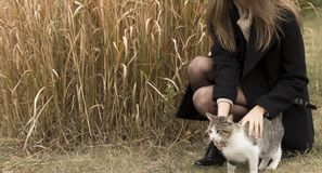 Girl stroking a cat royalty free stock image