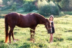 Girl stroking her horse. On the sunlit field Stock Photo