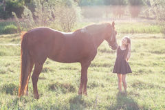 Girl stroking her horse. On the sunlit field Royalty Free Stock Images