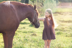 Girl stroking her horse. On the sunlit field Stock Photography