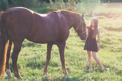 Girl stroking her horse. On the sunlit field Royalty Free Stock Photo
