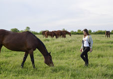 The girl is stroking the horse. Girl with horses in the pasture. The girl is stroking the horse. Girl with horses in the pasture Royalty Free Stock Photography