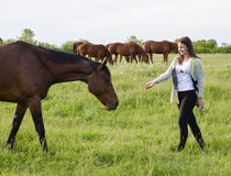 The girl is stroking the horse. Girl with horses in the pasture. The girl is stroking the horse. Girl with horses in the pasture Stock Photos