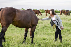The girl is stroking the horse. Girl with horses in the pasture. The girl is stroking the horse. Girl with horses in the pasture Stock Photography