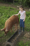 Girl Stroking Pig In Sty Stock Images
