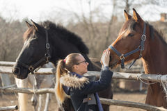 Girl stroking a thoroughbred horse in the pen for paddock Royalty Free Stock Photos