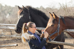 Girl stroking a thoroughbred horse in the pen for paddock Royalty Free Stock Image