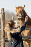 Girl stroking a thoroughbred horse in the pen for paddock Stock Image