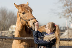 Girl stroking a thoroughbred horse in the pen for paddock Stock Photography
