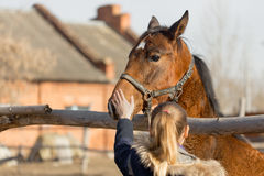 Girl stroking a thoroughbred horse in the pen for paddock Stock Photo