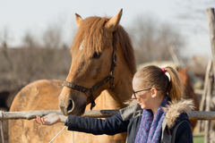 Girl stroking a thoroughbred horse in the pen for paddock Royalty Free Stock Photo