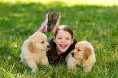 Girl on stroll with puppies. Girl is on a stroll with golden retriever puppies. Child is laying on grass between two wonderful furry balls. Lovely outdoor photo stock photo