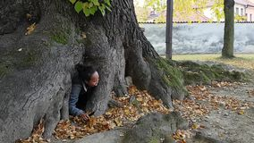 Girl stuck in huge linden tree. Indonesian girl - young Papuan woman stuck in hole of huge linden tree stock footage