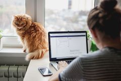Girl student freelancer working at home on a task, the cat is si. Tting on the window royalty free stock photo