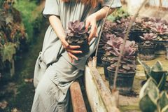 Girl and succulents stone rose royalty free stock image