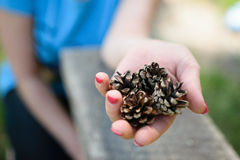 The girl suggests to take from her a cedar cone Royalty Free Stock Image