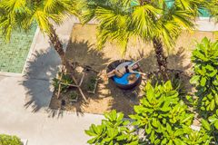 Girl in sun loungers among palm trees near the swimming pool royalty free stock image