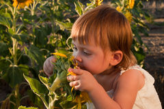 Girl and sunflowers Stock Photos