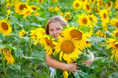 Girl and sunflowers Royalty Free Stock Image