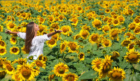 Girl in sunflowers Royalty Free Stock Image
