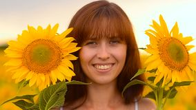 Girl in sunflowers stock footage
