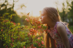 Girl and sunset light Stock Photography