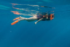 Girl in swimming mask and flippers dive in Red sea. Underwater shoot Stock Photography