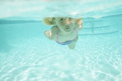 Girl swimming underwater. A young girl in a swimming pool with her eyes open underwater Royalty Free Stock Photography