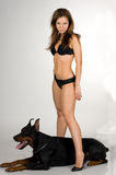 Girl in swimsuit with Doberman on white backgro Stock Images