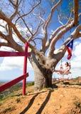Girl Swinging Tree Puerto Rico royalty free stock photography