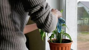Girl takes care of plants stock footage