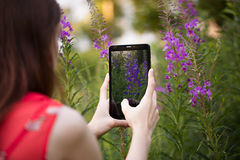 Girl takes photo. Pretty girl is doing photo on tablet. Red dress, bright make up, flower in hair Stock Image