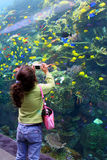 Girl Takes Picture At Aquarium. A young girl takes pictures of fish at the Georgia Aquarium Stock Images