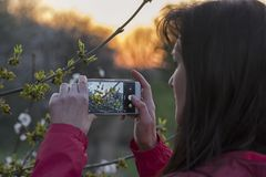 Girl takes pictures of a sprig Stock Photography