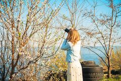 A girl takes pictures of a spring blossoming tree close-up. Natural texture of a tree. royalty free stock image