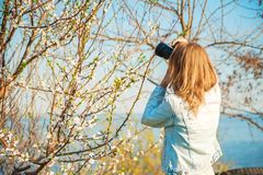 A girl takes pictures of a spring blossoming tree close-up. Natural texture of a tree. stock photos