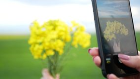 Girl takes pictures of a yellow daffodils on a smartphone. Girl takes pictures of a yellow daffodils stock video footage