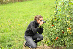 Girl taking close-up photo of tomatoe plant Royalty Free Stock Photography