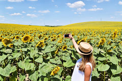 A girl taking selfie in a sunflower farm. A young lady in the middle of a big sunflower farmland taking self portrait selfie with smartphone during bright summer Royalty Free Stock Images