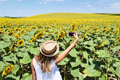 A girl taking selfie in a sunflower farm. A young lady in the middle of a big sunflower farmland taking self portrait selfie with smartphone during bright summer Royalty Free Stock Photography