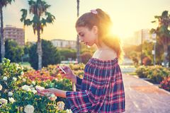 Girl taking smartphone photo to rose flower royalty free stock photography