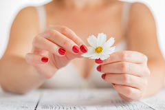 The girl tears off the petals of daisy. Stock Images