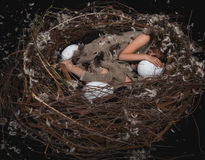 Girl teen in bird's nest Stock Photography