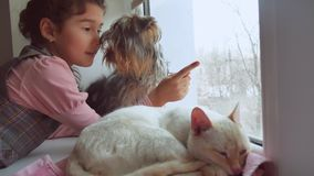Girl teen and pets cat and dog looking out the window, the cat pet sleeps. Girl teen and pets cat and dog looking out the window, cat pet sleeps Royalty Free Stock Images