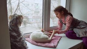 Girl teen and pets cat and dog a looking pet out the window, cat sleeps. Girl teen and pets cat and dog looking pet out the window, cat sleeps Stock Images
