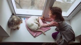 Girl teen and pets cat and dog pet a looking out the window, cat sleeps Royalty Free Stock Image
