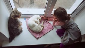Girl teen and pets cat and dog a pet looking out the window, cat sleeps Royalty Free Stock Photography
